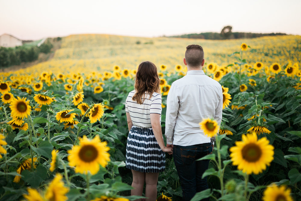 Pope-Farms-Sunflower-Engagement-Session-Madison-Wisconsin_016.jpg