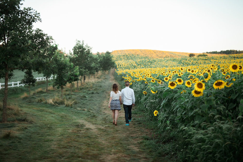 Pope-Farms-Sunflower-Engagement-Session-Madison-Wisconsin_030.jpg