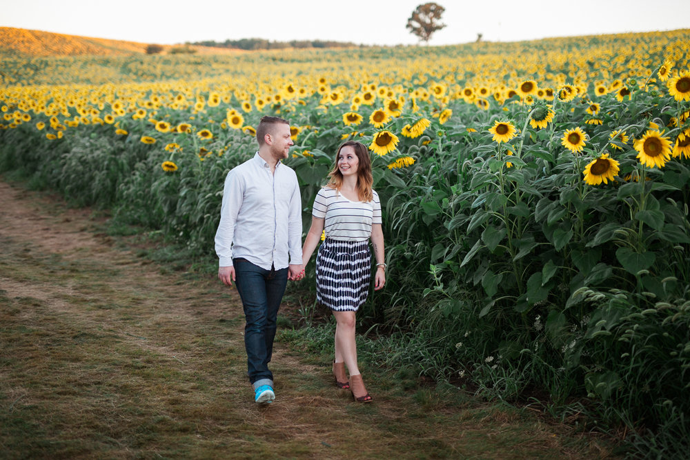 Pope-Farms-Sunflower-Engagement-Session-Madison-Wisconsin_032.jpg