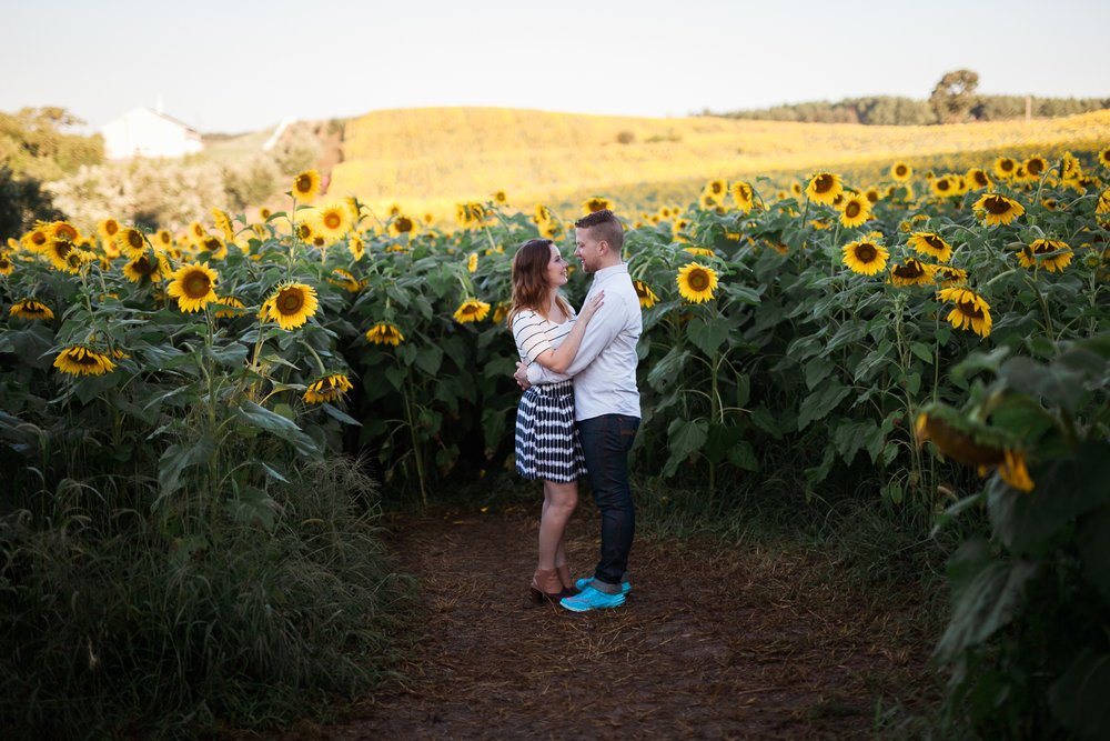 Pope-Farms-Sunflower-Engagement-Session-Madison-Wisconsin_045.jpg