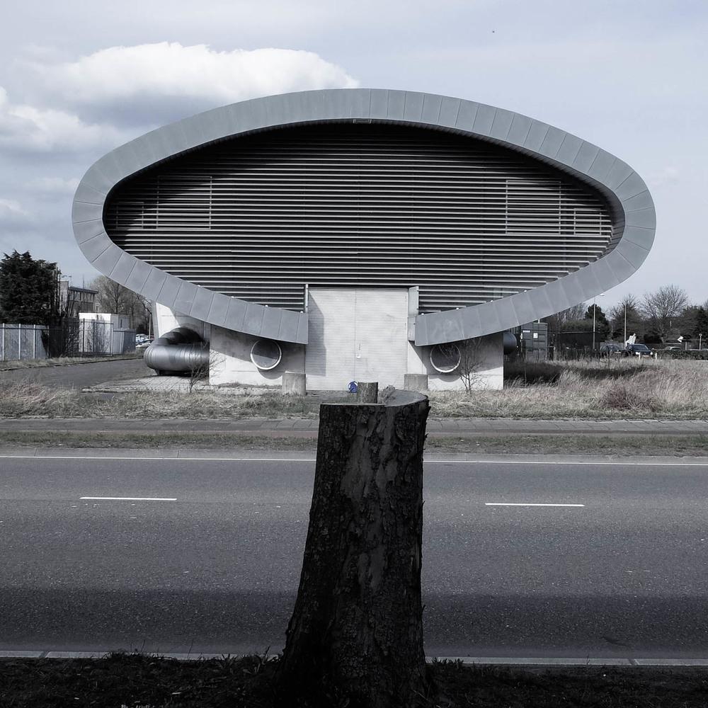 Mushroom (Not Magic)