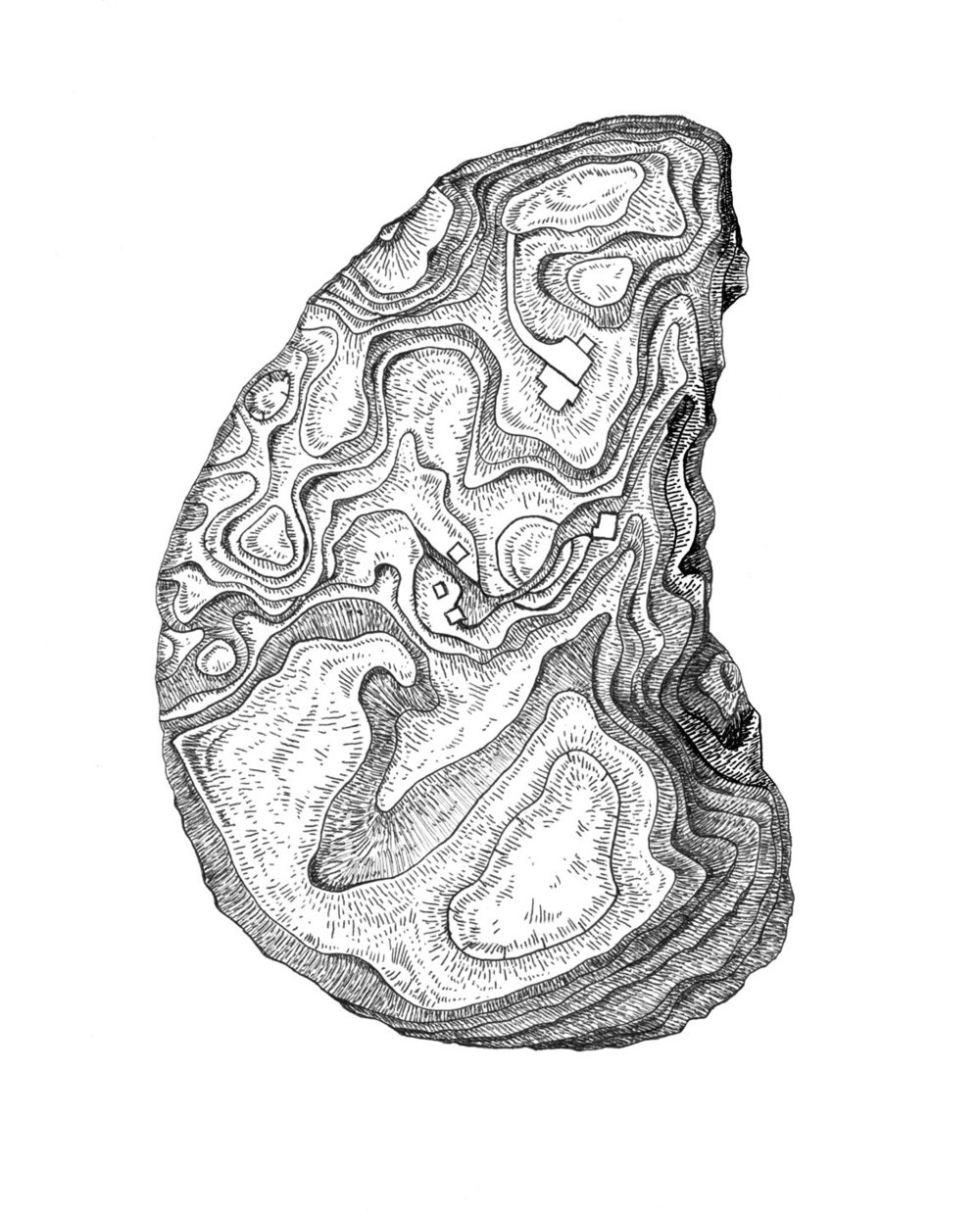 Quail Hill Oyster    ink and digital, 2016  Tattoo design incorporating topographical features of Quail Hill Farm into the shape and texture of an oyster.