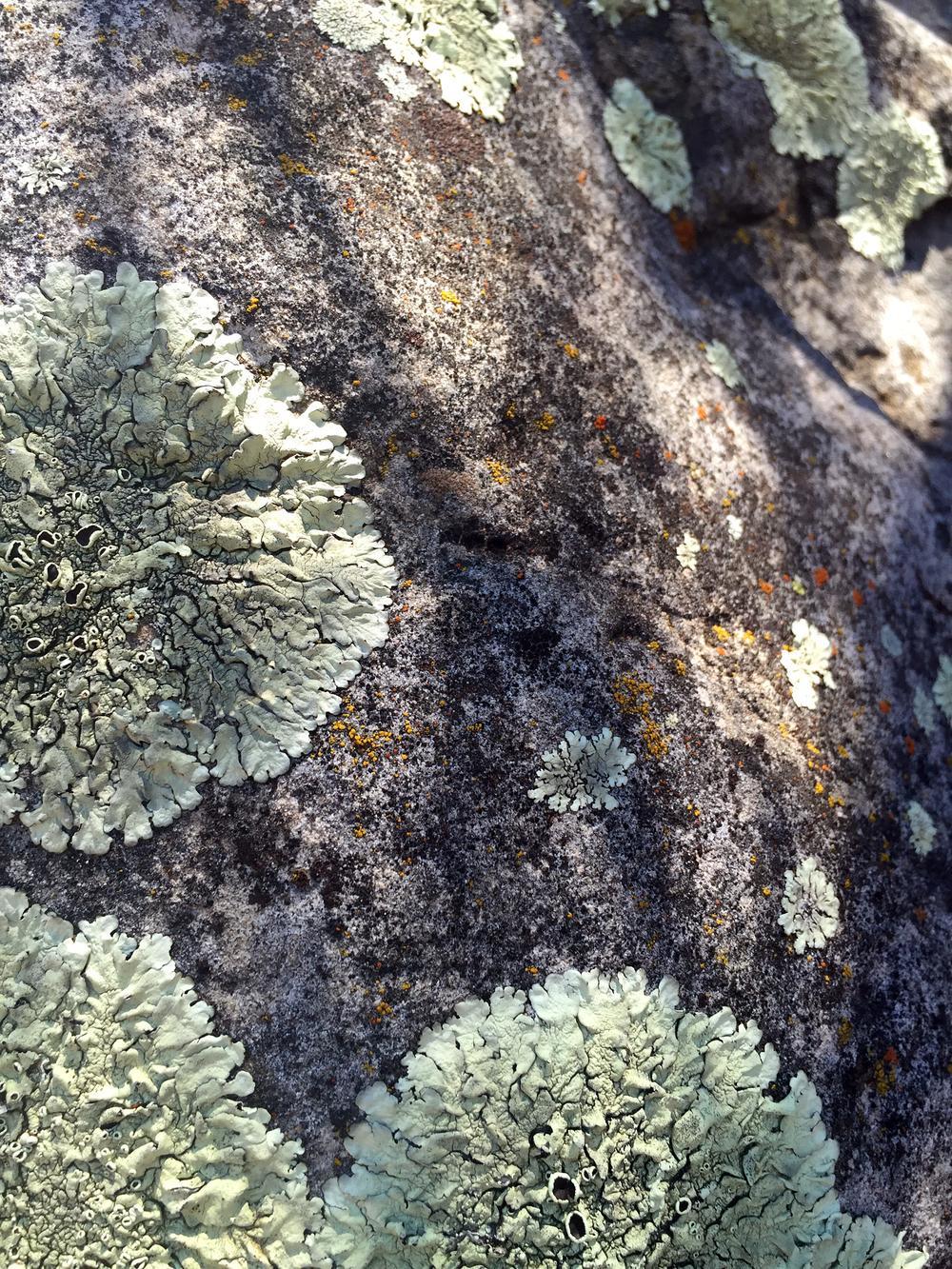 Texture in Matilija Canyon in Ojai, CA