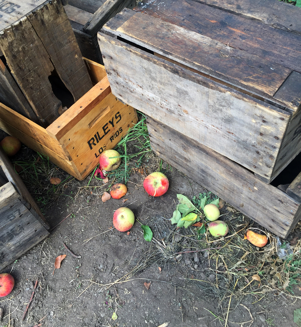 Riley's Apple Farm, Oak Glen