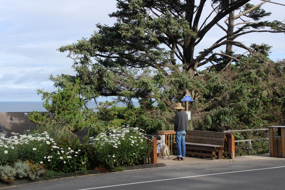 Trail to Cannon Beach, Oregon.jpg