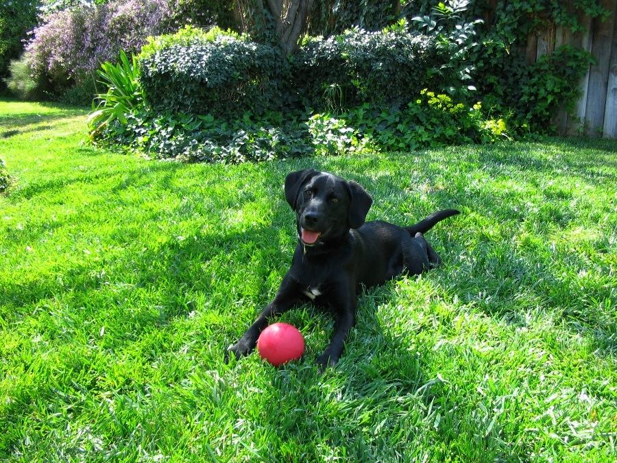 Zoink Dog Toys