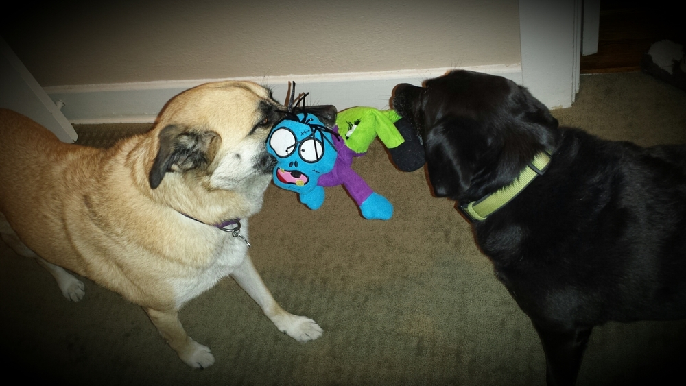 Carol and Dak playing tug with Frostbit Fred.jpg