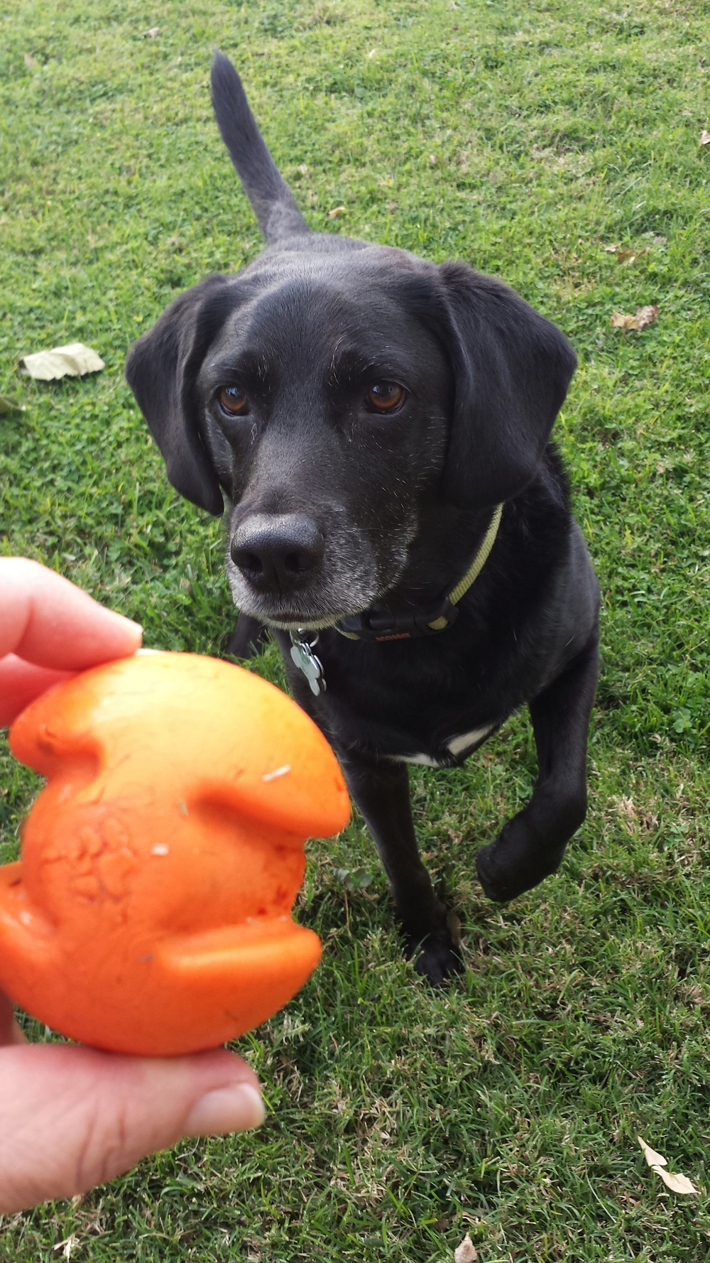 Dakota with Orange ball.jpg