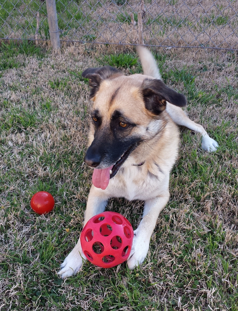Carolina with her new ball 2.6.15.jpg
