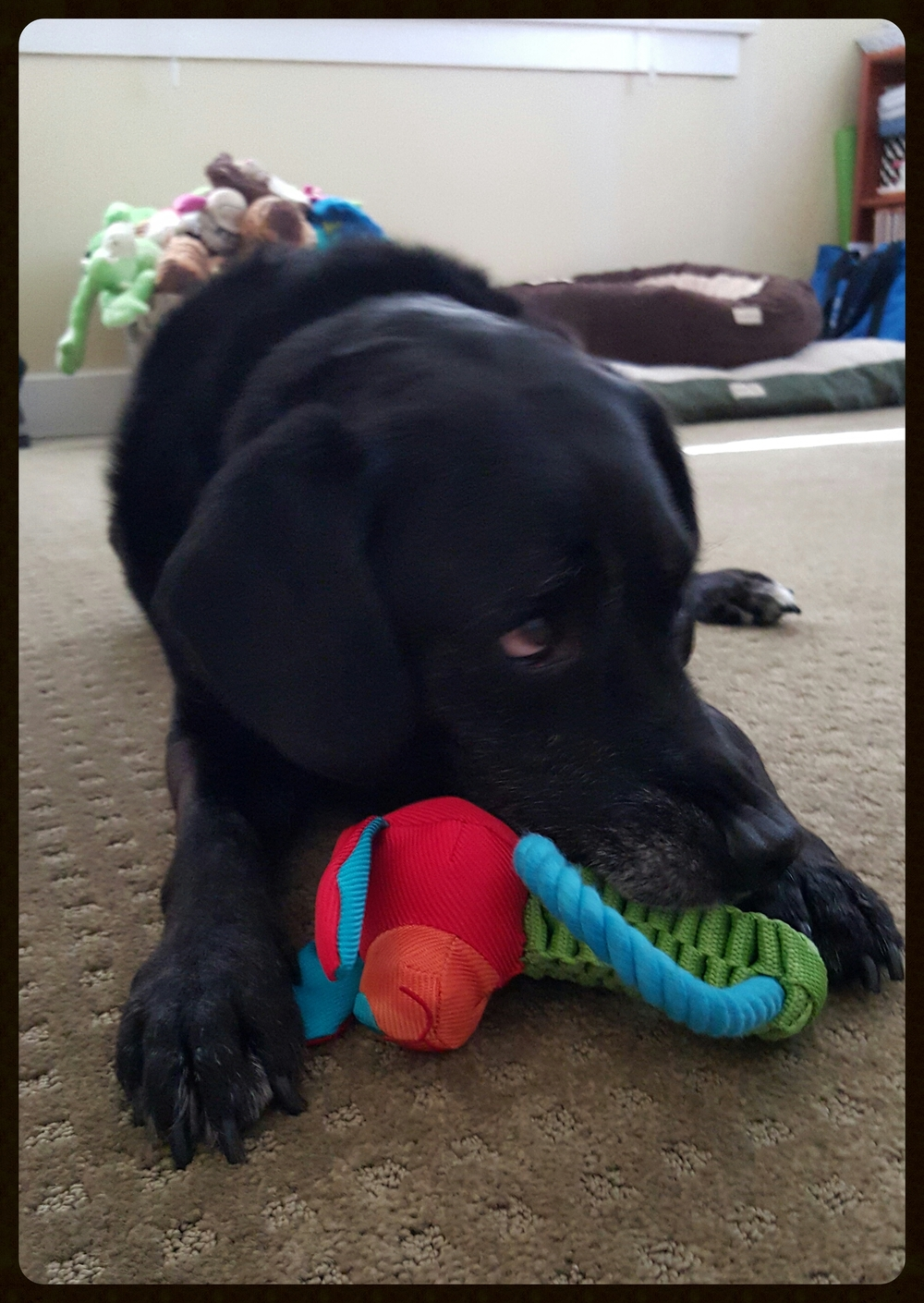 Dakota with a Pugslie