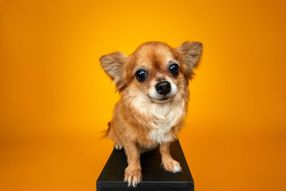 Yaneck-Wasiek-Pets-Stella-The-Queen-of-Orange.jpg