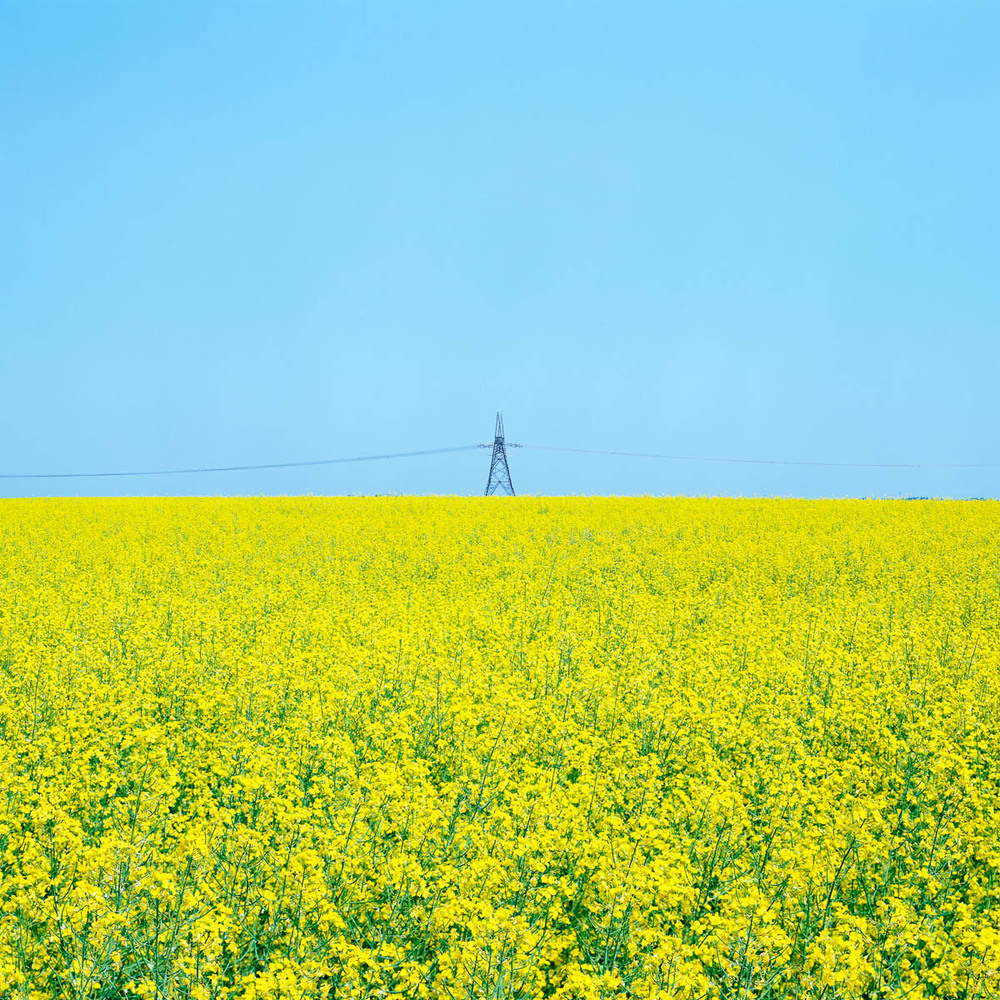 Canola Power, Alberta, 2005