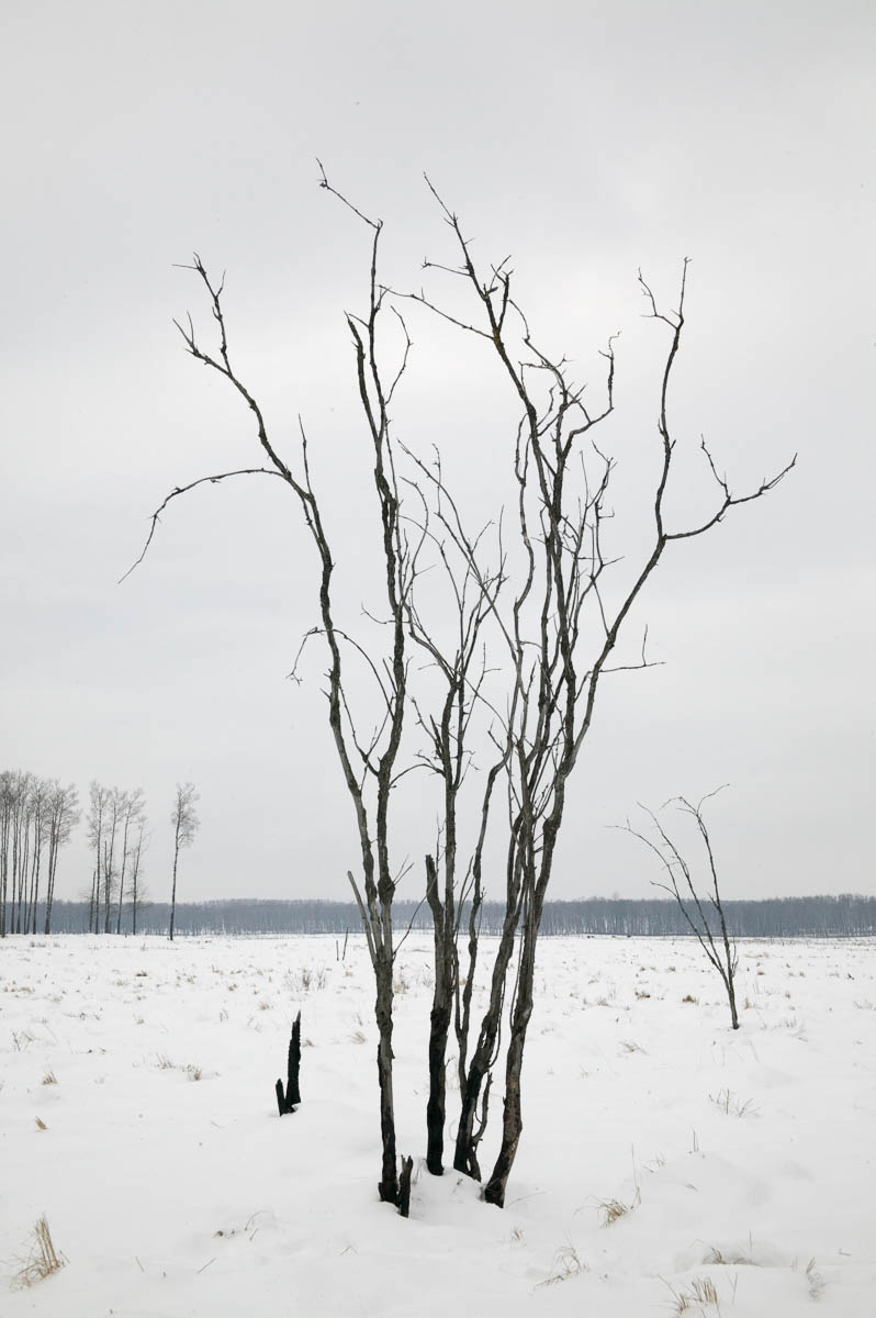 Defrocked, Elk Island National Park, 2003