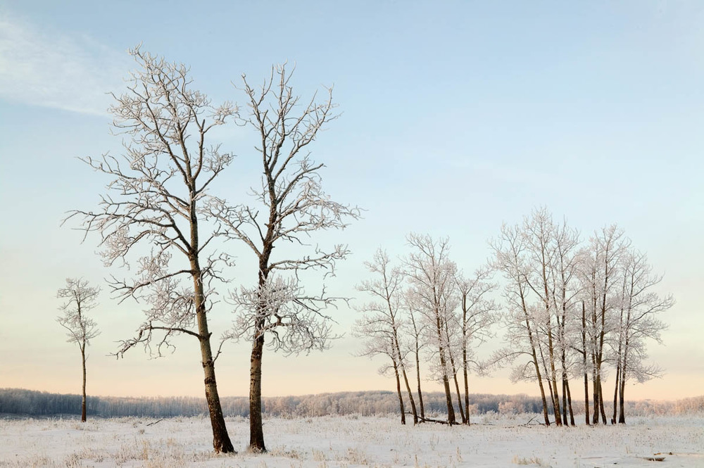 Frosted Trees, Elk Island National Park, 2003