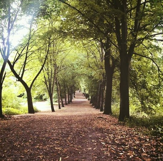 """Hampstead Heath… - Glory of London! Where Keats walked and Jarman fucked, where Orwell exercised his weakened lungs and Constable never failed to find something holy."""" ― Zadie Smith"""