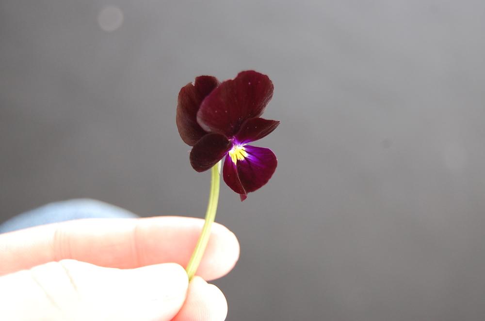 Sentir ervas frescas nas mãos. Pegar nas flores e pensar no tanto que podem mudar a nossa alimentação.