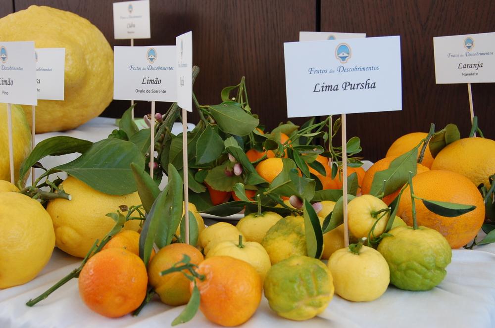 Citrinos. É preciso um Francês explicar-nos que os citrinos são locais e que pouco ou nada os exploramos…