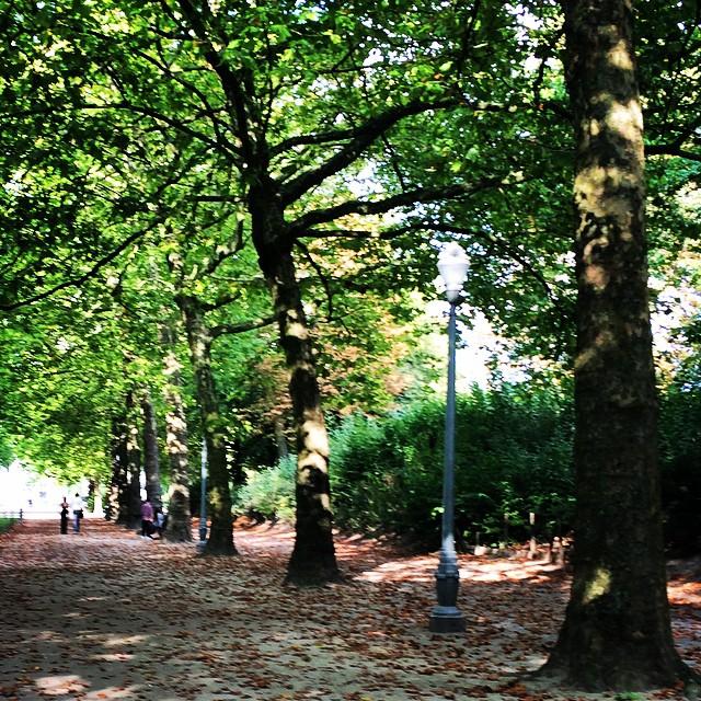 A Bruxelas que conheço é esta: uma cidade para correr no jardins.