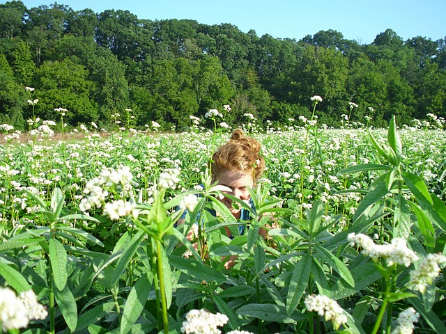 Hiding in Cover Crop.JPG