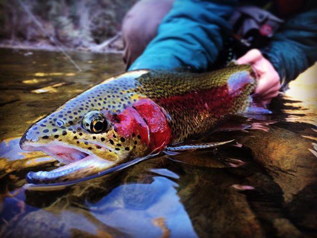 Frozen Fingers. #flyfishing #britishcolumbia #rainbowtrout #sageflyfish #smithoptics #redingtongear