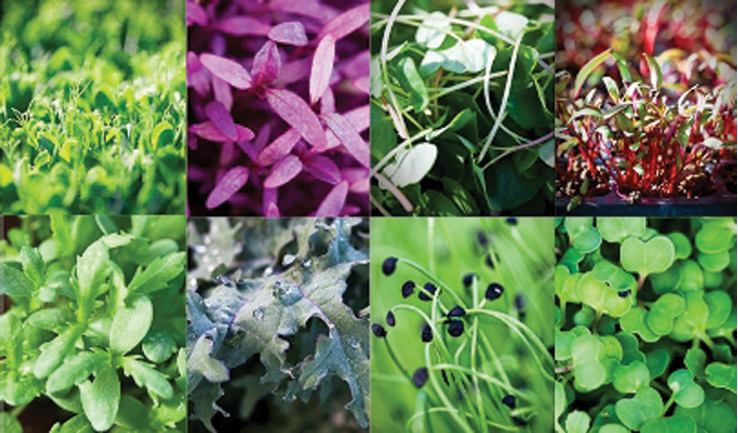 We source only the highest quality edible flowers, micro-greens and herbs