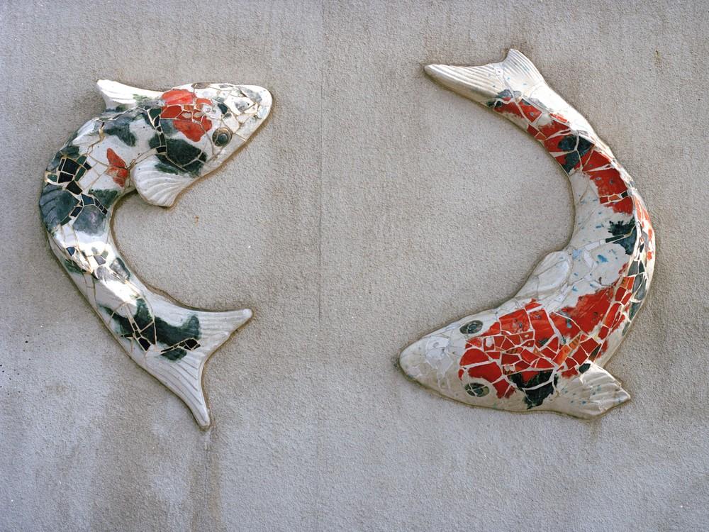 yinyang fish.jpg