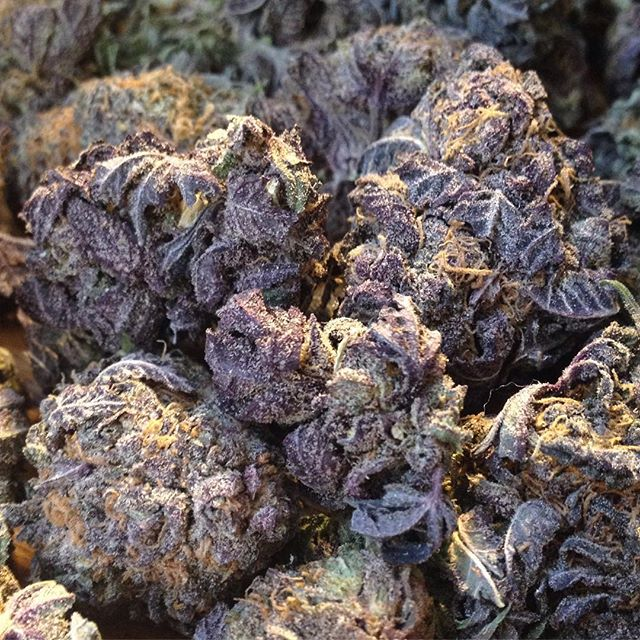 Granddaddy Purple Kush! So... PURPLE! This Scrumptious #Indica is in stock now! #mmj  #weed #weedporn #budporn