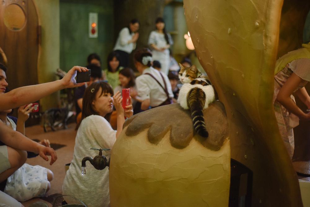 JapanCatCafe-4.jpg
