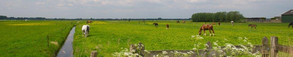 oosterwold-paarden.jpg