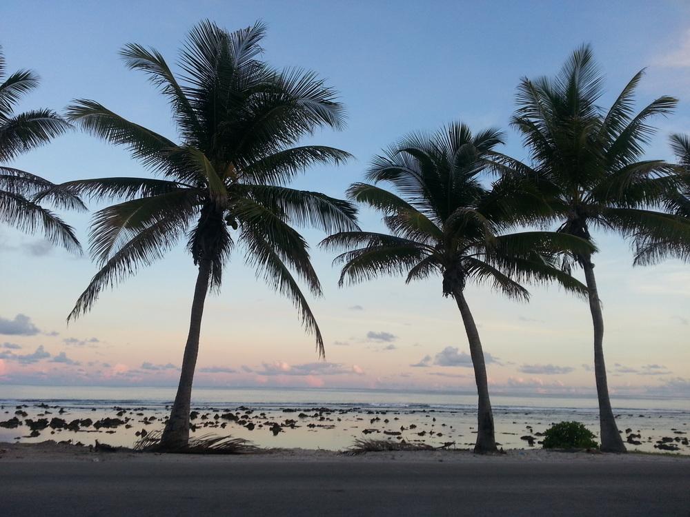 Palms in Nauru