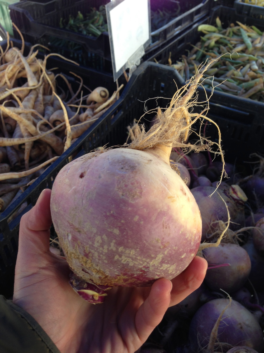 Buying some rutabaga at the Greenmarket in Brooklyn. Did you know it is one of the highest anti-fungal foods?
