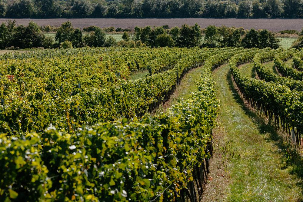 Weinbaugebiet Thermenregion