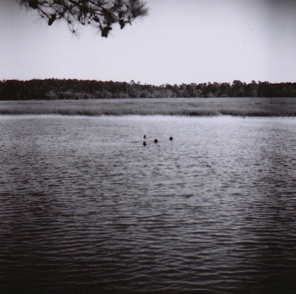 swimming2.jpg