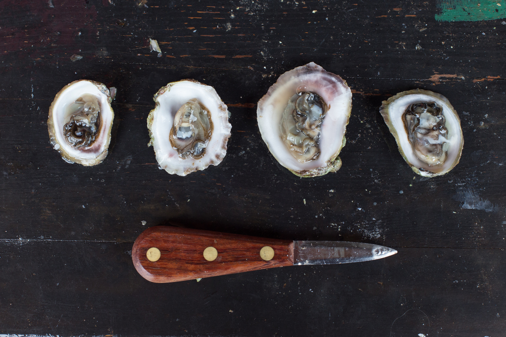 Ball and Buck Journal How to Shuck an Oyster