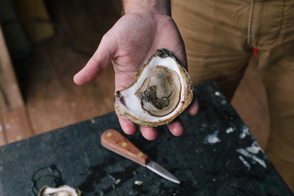 oystering-cape-breton-8009.jpg