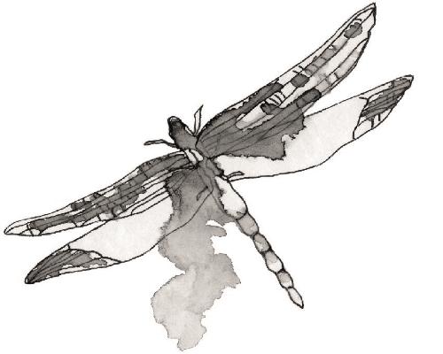 SudenkorentoVesiväriMustaValko.jpg