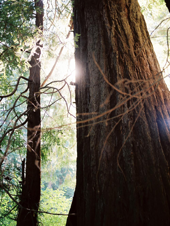 San-Francisco-California-Wedding-Photography-Engagements-Matt-Rachel-18.jpg