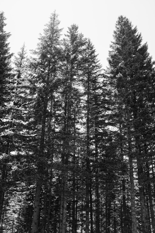 Elizabeth  Nick Drollette Alabama Oregon Photography-104.jpg