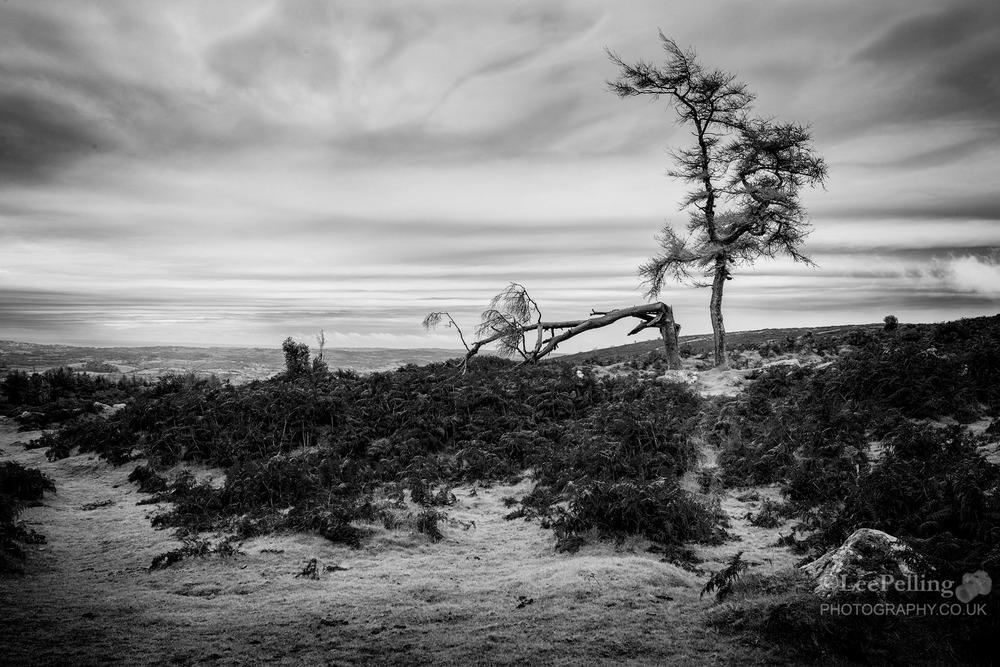Haytor Dartmoor 5873