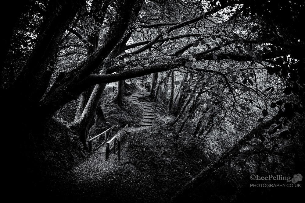 Lydford Gorge 6009