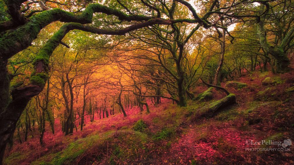 Dewerstone Woods 6149