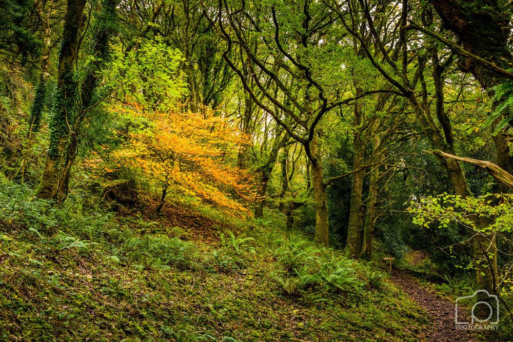 Horner Woods