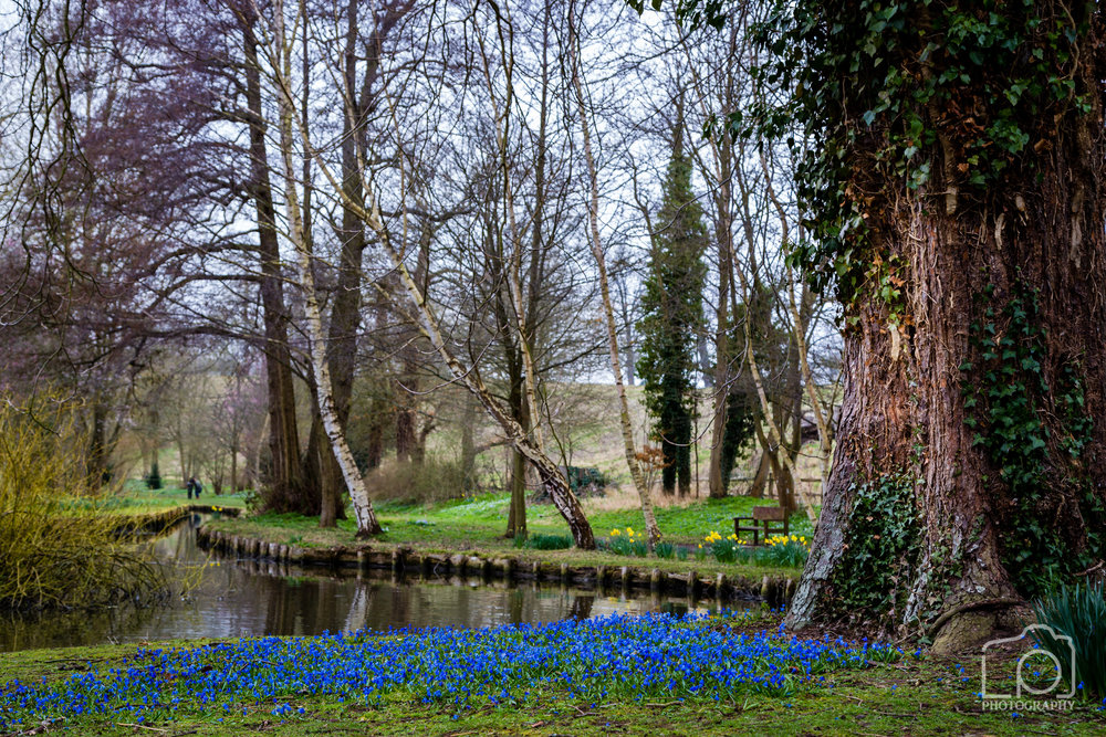 Leeds Castle Woodland - 1244