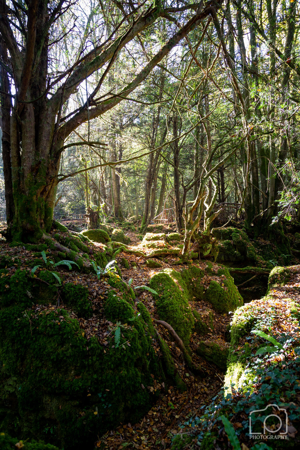 Forest of Dean-2487
