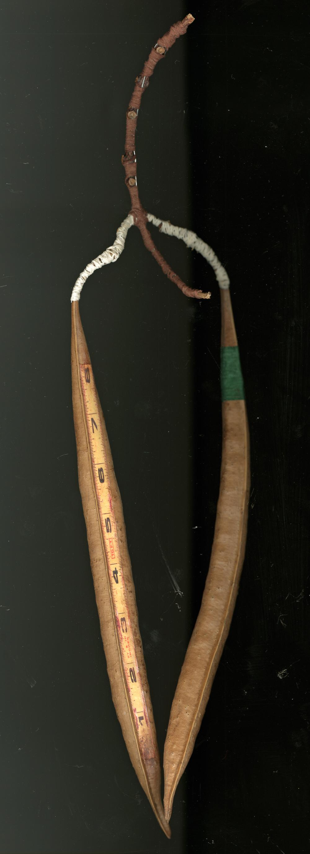 Mame monosashi (bean ruler)