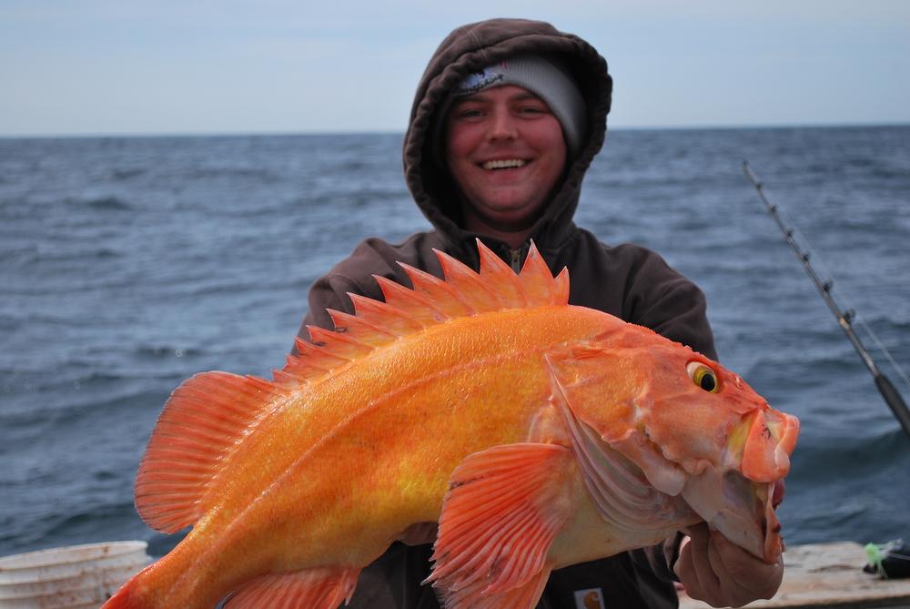 guy holding yellow eye rock fish