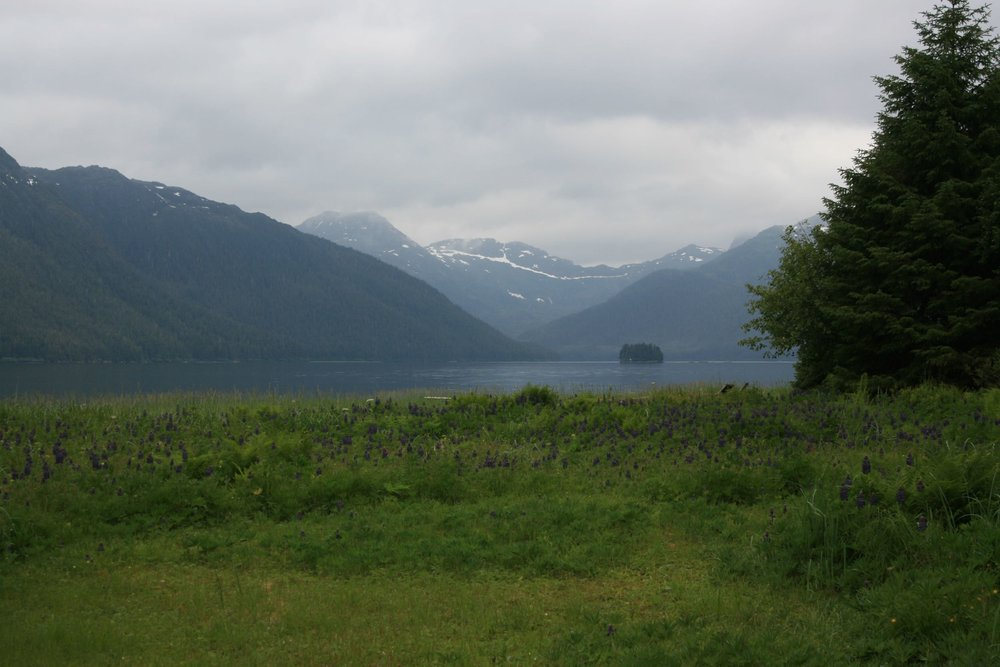 The view of Lisianski Inlet from the lodge, a calm June day, look closely you might see a ball of herring breaking the surface and a big king salmon chasing them!