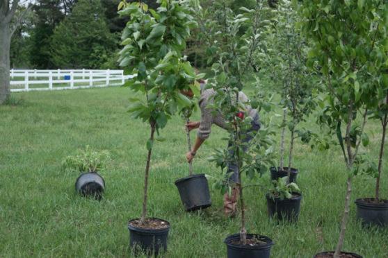 organictrees