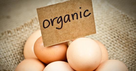 organicconsumer