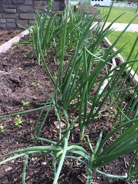 growingplants